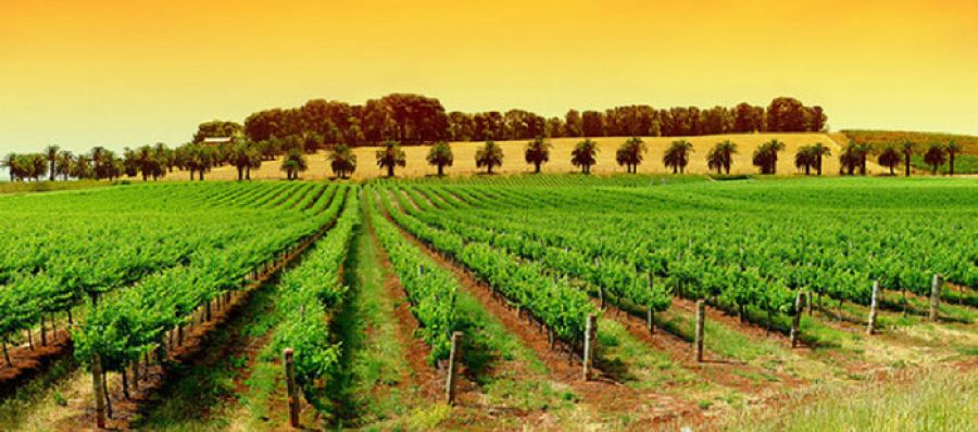 Photo for: South Australian Wine Group