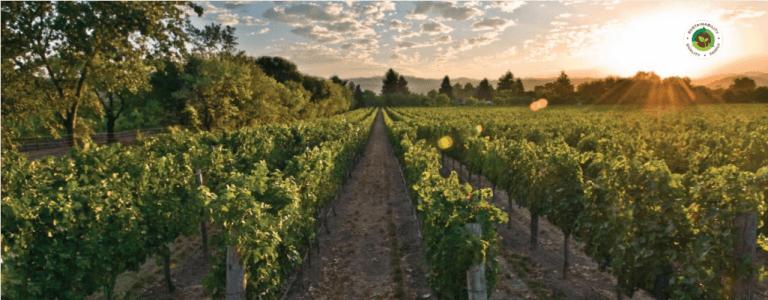 Delicato Family Vineyards Farmed Since 1924