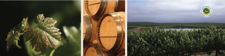 Delicato Family Vineyards Produces Quality Wine