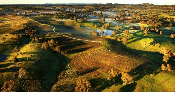 Winegrapes Australia