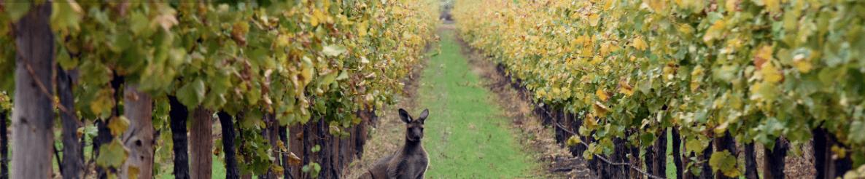 Growers Wine Group Farm
