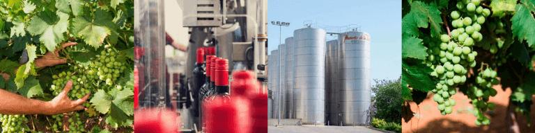 Mamerto De La Vara is a leading Wine Producer