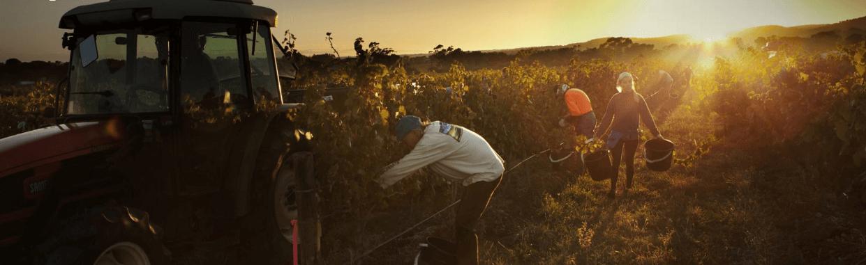 Winegrapes Australia - Growers