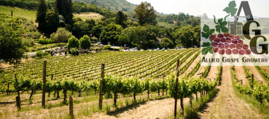 Photo for: Update On California WineGrape Crush Size