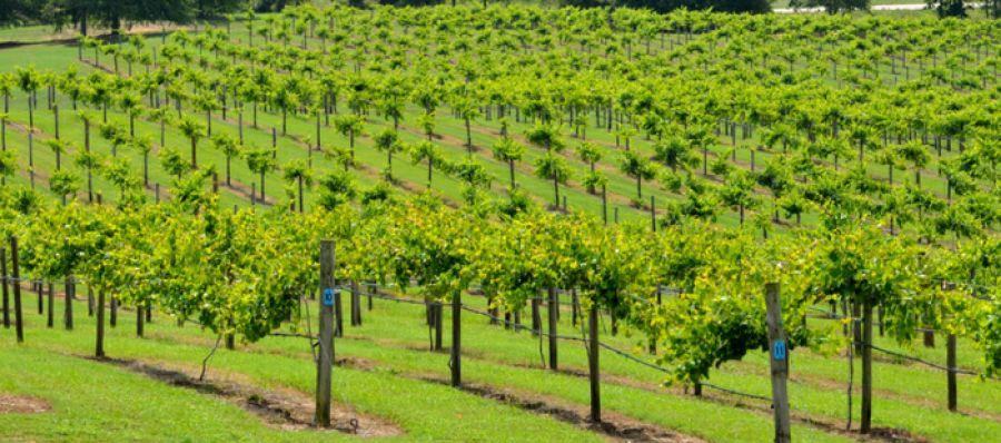 Photo for: Bear Creek Winery